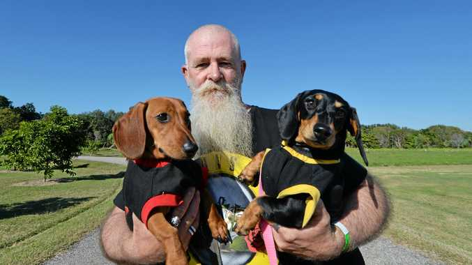 GALLERY: 90kg pooch steals show at Million Paws Walk