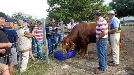 New Caledonian farming group visits Scenic Rim stud farm