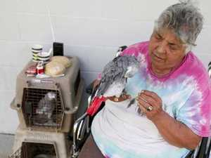 'Noah's ark' of pets saved from volcano