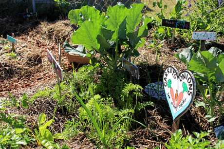 PLENTY OF PLANT: Students from Glennie Heights all pitch in to improve healthy habits.