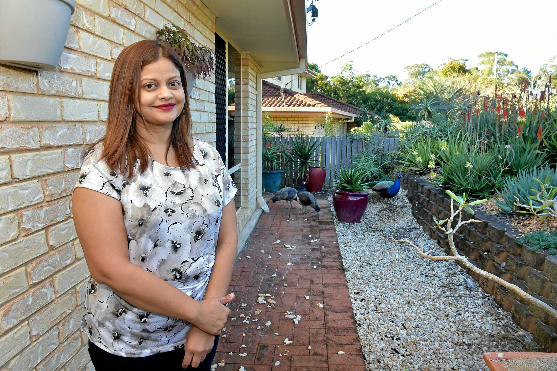 Perveen Hassim-Borthwick would like to see the peacocks kept in the Glass House Mountains despite some residents wanting them moved on.