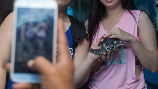 There have been documented cases of tourists dropping turtles in wildlife venues, which could potentially injure the creature and do damage to its shell.