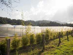 'Noisy' farm worries neighbour