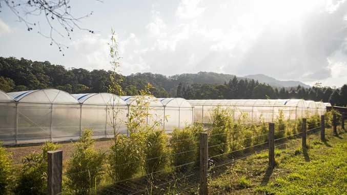Pocket Herbs and Produce farm located on Howards Road, Burringbar.