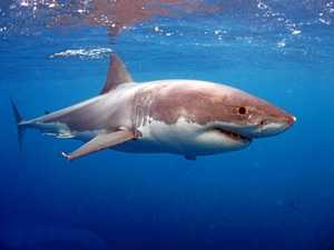 Technology reduces shark attack risk