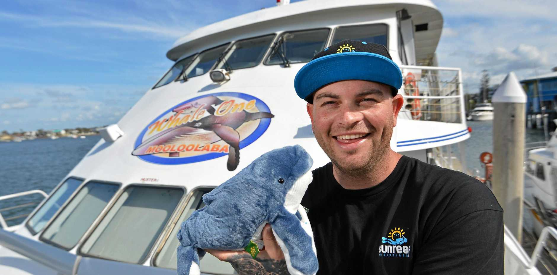 DREAM JOB: Scuba diving and whale swim operator Dan Hart of Sunreef Mooloolaba has added whale watching to his company's services with the purchase of Whale One.