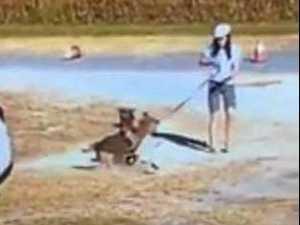 Council responds to dog attack criticism