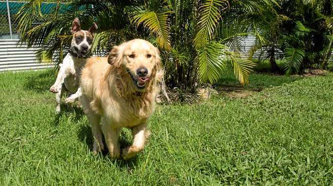 Bundaberg community behind responsible dog breeding