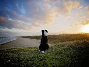 REVEALED: Coast's 13 most popular dog breeds and dog names