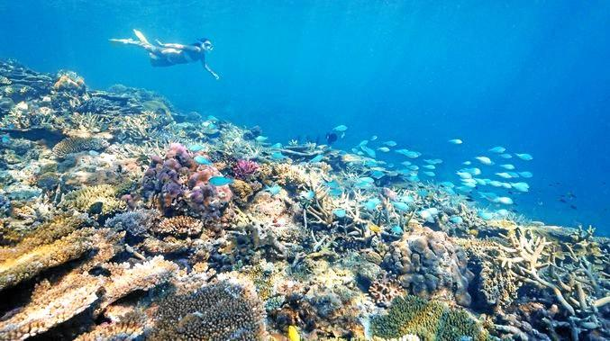 Reef tourism outshines Gold Coast with big visitor numbers