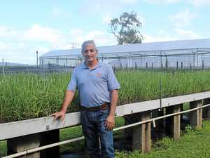 New options for cane growers