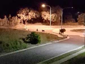 Wild animals on the loose in coast estate