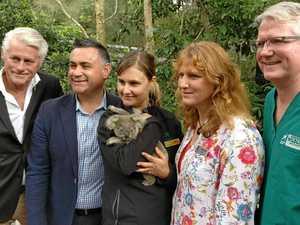 Sick koalas get $370,000 boost