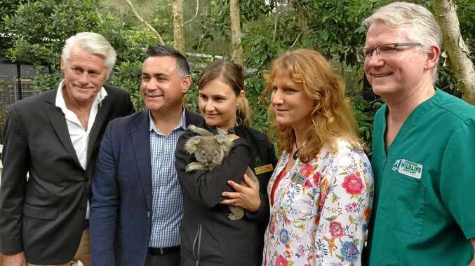 A LITTLE HELP: Tweed MP Geoff Provest, NSW Deputy Premier John Barilaro, wildlife officer Heidi Patrick, Mayor Katie Milne and Dr Michael Pyne at the Pottsville koala sanctuary announcement.