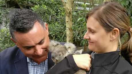 NSW Deputy Premier John Barilaro and Wildlife Officer Heidi Patrick with a baby koala at the Currumbin Wildlife Hospital.