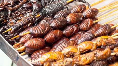 Would You Drink Cockroach Milk - And Should You?