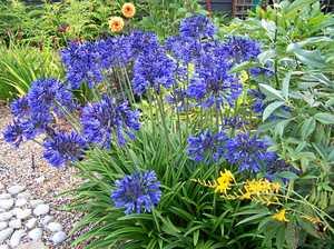 Build spring gardens in winter