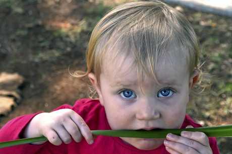 Paisley Mendezona-Cowper tastes a lomandra.