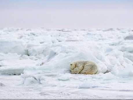 """Nap Time by Susan Portnoy. """"Each day we'd walk for miles searching for wildlife. We came across this young lady a few moments before this photo was taken,"""" she said. """"Her head was up and she was looking around. But when she curled up in this fetal position, my heart just melted."""" Picture: Susan Portnoy/National Geographic Travel Photographer of the Year Contest"""