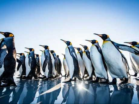 Marching Penguins by Yusuke Okada. Picture: Yusuke Okada/National Geographic Travel Photographer of the Year Contest