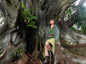 Doomed fig tree attracts wave of support