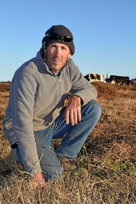 HARD TIMES: Brent Hoffman at his Junabee dairy farm where drought is creating increasing financial pressure.