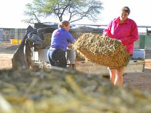 DESPERATE: Farmers face worst hay shortage in five decades