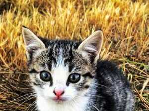 Fake kitten used as excuse for drug driving