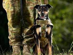 The quiet heroes of Australia's military