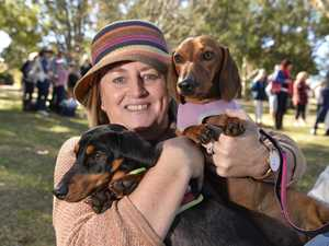 Great Australian Dachshund Walk