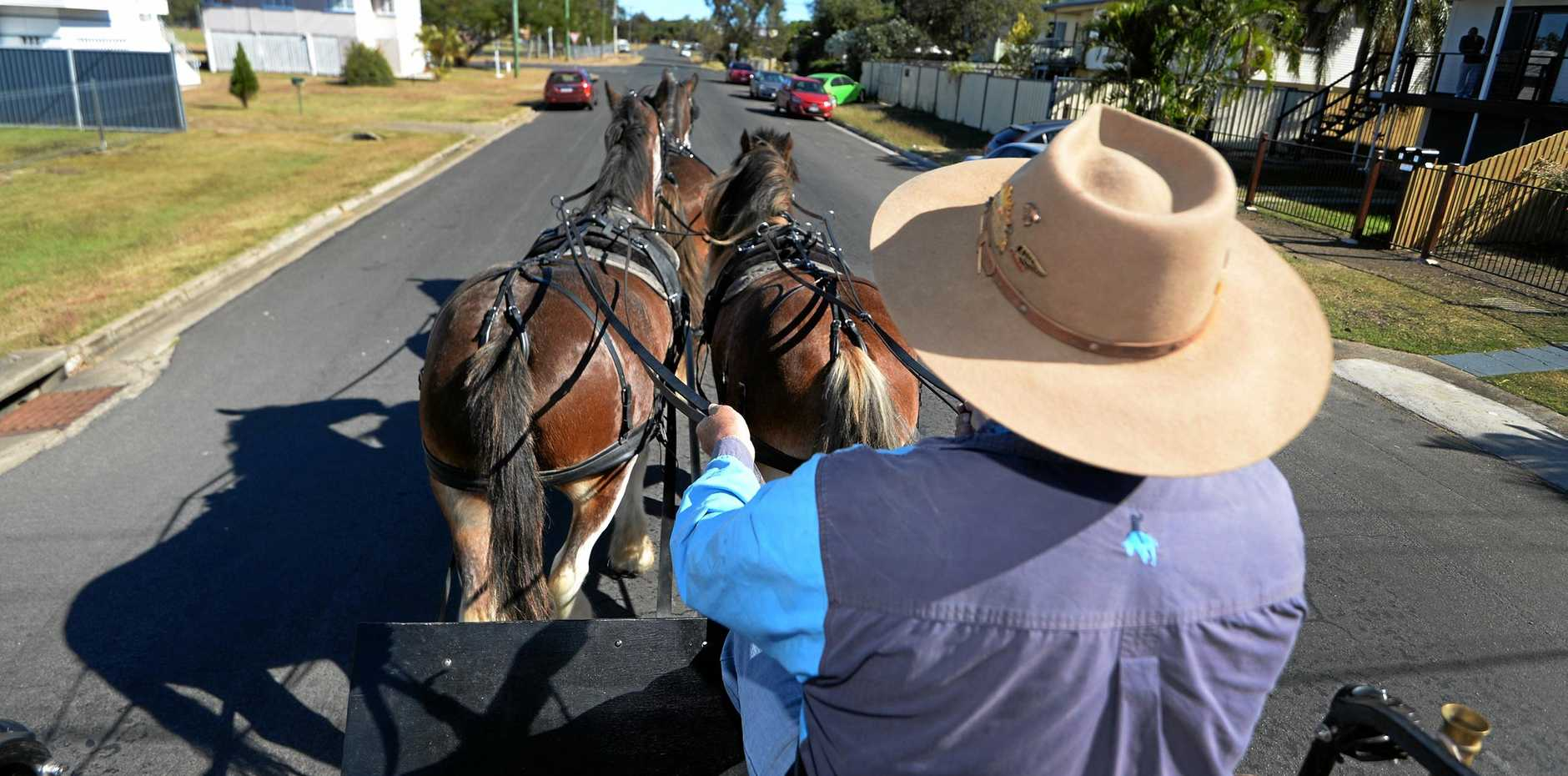Steve May at the reins while taking his clydesdale horses for a walk in Berserker.