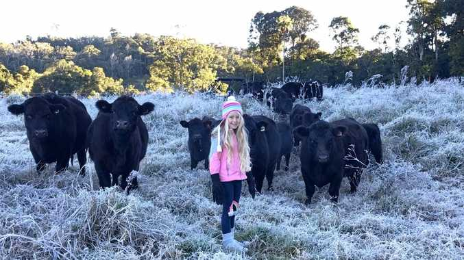 Freezing mornings at Cloudbreak Lowlines Cattle and Eungella Beef.