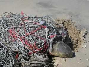 Australian beaches dumping ground for Asia