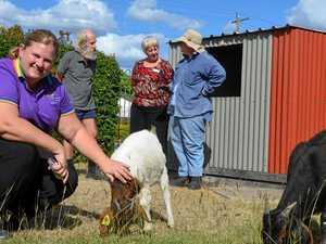 Gunther Village gets goats, no kidding