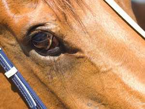 UPDATE: Toddler kicked by horse awake, responsive