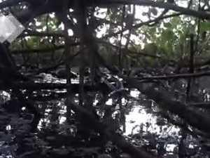 Platypus frolic in Botanic Gardens
