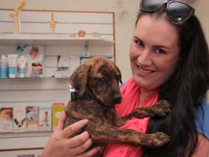 Dog rescue group 'startled' by drop in adoption offers