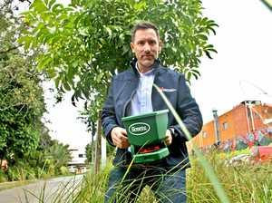 Invasive ant eradication program kicks off in Lismore