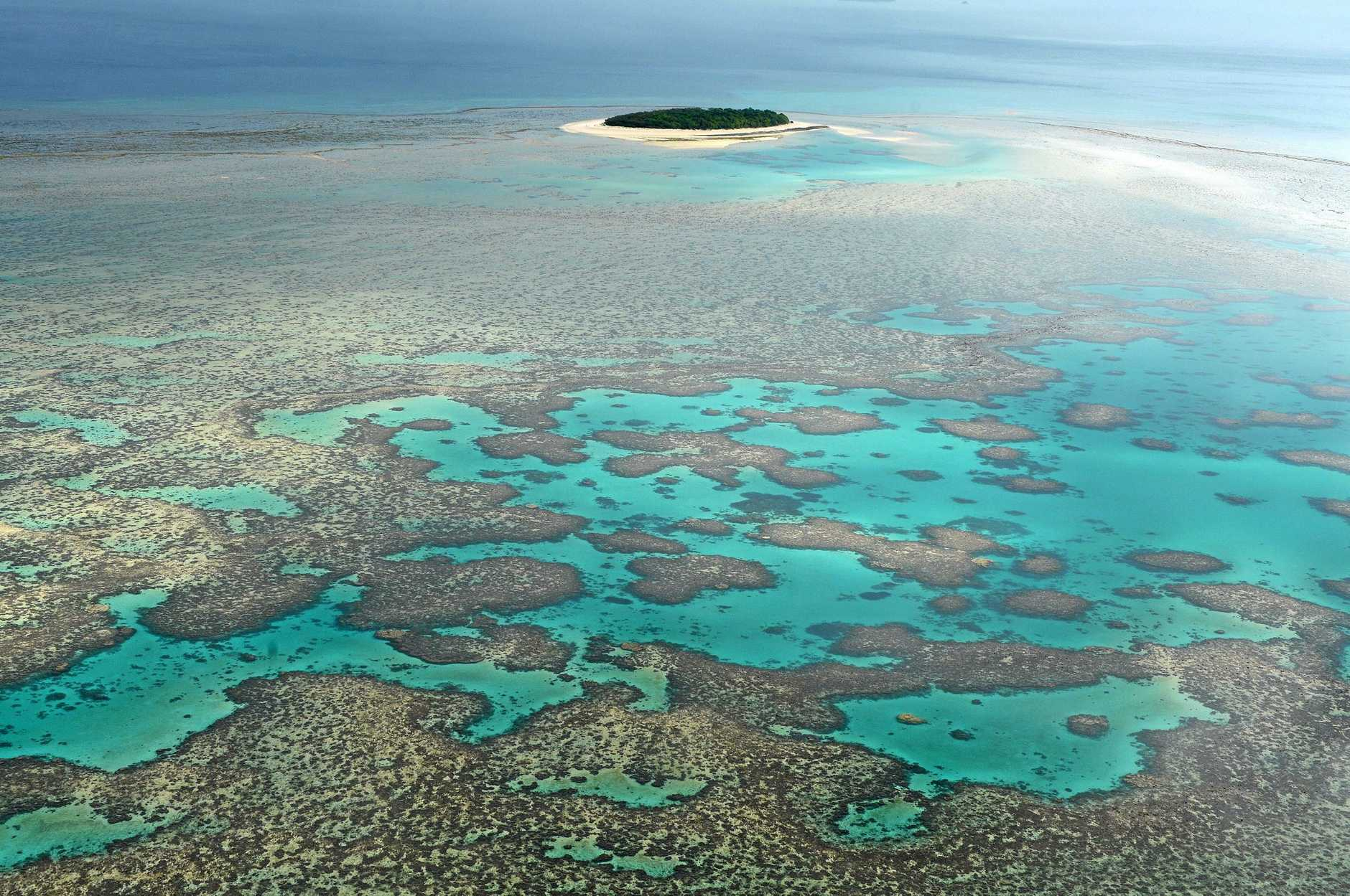 Great Barrier Reef tourists to be targeted by protesters.