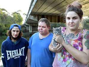 Kittens 'dumped' daily on Coast