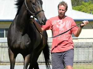 Luckless gelding back on the track