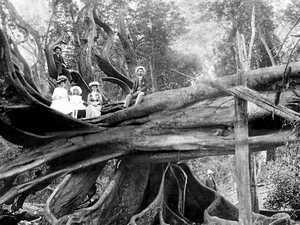 Susan Island in its heyday