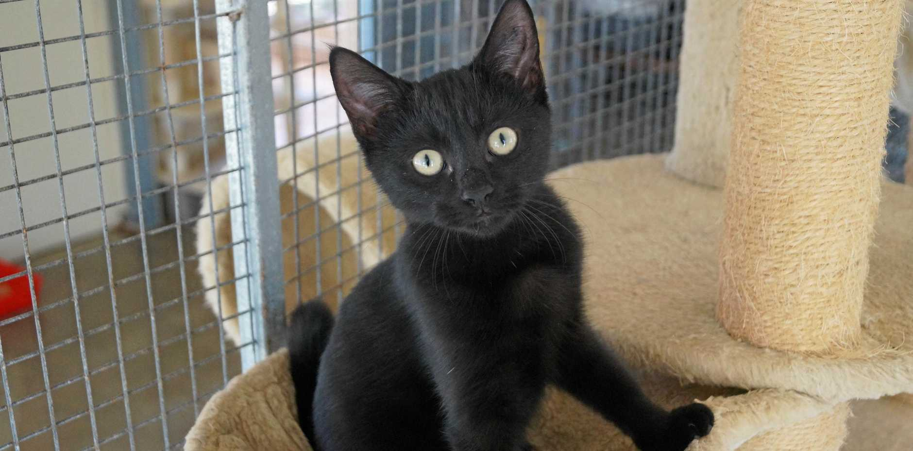 HAVE A HOME: Fleur is looking for forever snuggles.