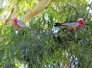 Trees topic of importance at library wildlife talk