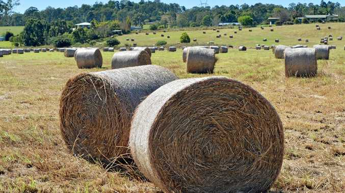 HAY IN DEMAND: Southern Downs farmers are scrambling to find feed for their livestock.