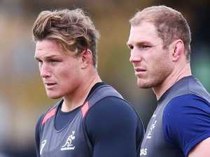 Wallabies discover backrow riches