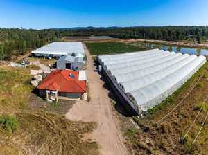 Lockyer Valley cucumber farm up for grabs
