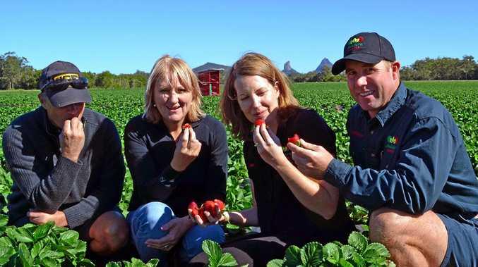 Ashbern Farms Jon and Bernadine Carmichael look forward to a bumper crop