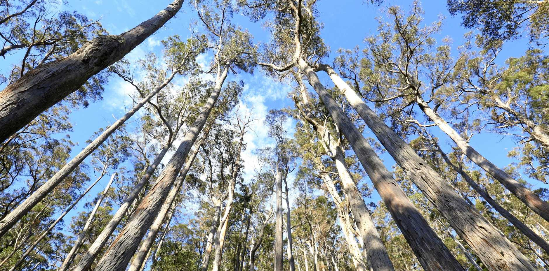 The draft Coastal Integrated Forestry Operations Approvals, released last month, is open for consultation until the end of the month.