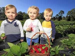 Why our strawberries wowed Asian markets